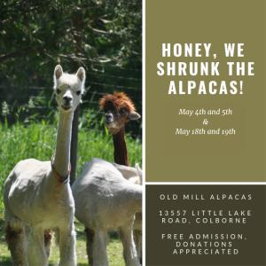 Honey, We shrunk the alpacas!
